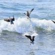水鳥たちが北帰行の準備です