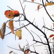 17-11-09 季節風