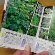 高山植物図鑑