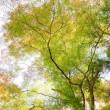 岩古屋山 谷間の樹木 2