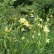 軽井沢のいろいろ 軽井沢に咲く花