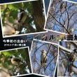 秋ヶ瀬公園でコイカルとツミに出会う(今季初の出会い)