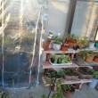 花苗用 4段温室作る