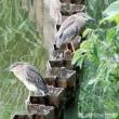 6月探鳥会 15種を探し観る
