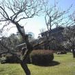 中村記念美術館の梅の香りがかぐわしい今朝の一枚