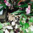 小さな花壇!