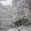 飛鳥の 「雪景色2018」