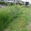 土手の雑草刈が大変