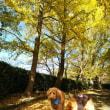 寺ヶ池公園の紅葉