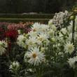 奈良大和路の花の見どころ 「馬見丘陵公園のダリア」