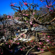 『1月の梅』 地福寺
