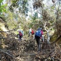 悪戦苦闘の天王山ハイキング