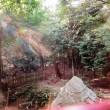 「天上の楽園」 白鬚神社 奉納演奏