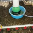 遠心式加湿器 鶏舎でのウイルス感染防止 湿度管理