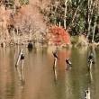 秋の水元公園(その3)水辺の風景と。