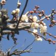 春近し(⌒‐⌒)