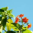 南の花ばな
