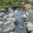【大雪山国立公園・旭岳情報】解氷進む池たち