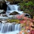 2359 川辺の秋
