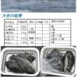 県外磯釣り大会【日振島・御五神】結果