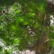 我が家の夏の植物とメダカ
