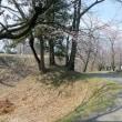 春の武蔵嵐山・・・中世の城郭・・・菅谷館跡・・・馬酔木の花に…ルリシジミ蝶?が舞う