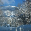 雪vsテルラ!!