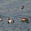 木曽川の鳥たち
