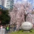 思いがけず上野で花見