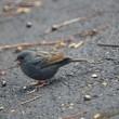 12/14探鳥記録写真(頓田貯水池の鳥たち:クロジ、キセキレイほか)