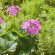 お気に入りの愛らしい花たち日ごとに成長、頑張る糧になる。理学療法士の施術で咳き込みがなくなった。