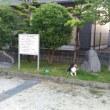 小次郎とネジバナ(捩花) ー 自宅&ほし咲き公園 ー