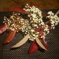 レッドロビンの花
