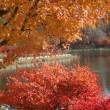 八ヶ岳と蓼科の紅葉