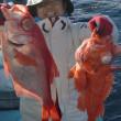 12月30日(土)石廊崎沖もキンメとアコウ狙い