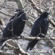 【 黒い鳥 】