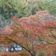 鴻巣山の植物