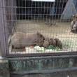 姫路市立動物園へ