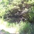 野呂高原ブルーベリー