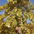 祖父江の黄葉まつり