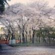 桜舞い散る木の下で