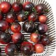 白玉ネギ  野菜の収穫  黒トマト
