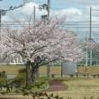 桜とスーパームーン