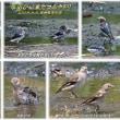 (8月6日の記)三番瀬と葛西臨海公園に行って来た