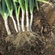 野菜の収穫・・・