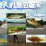 私魚人(あいうおんちゅ)図鑑⑥~タナゴ仕掛けで釣れた101~120種の生き物たち