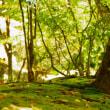 軽井沢 鹿島の森