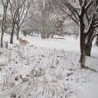 ❄️雪❄️