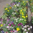 公園で元気に咲いていた夏の花