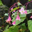仙石原の長安寺は花の寺でした